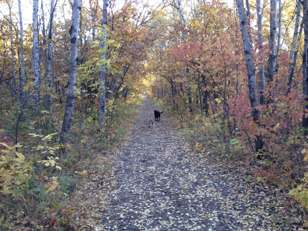 Abby walking in the fall forest