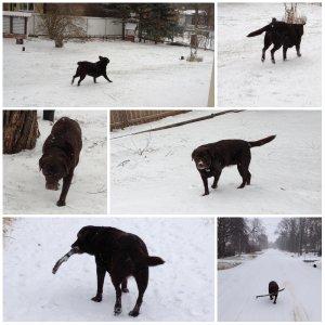 snowfall, Winnipeg winter, joy of winter, labrador