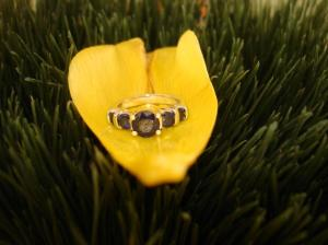 sapphires and gold ring, resting on a yellow tulip petal