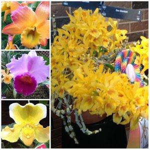 oro de rey, orchids, spring, gold of the king, winnipeg jeweller, custom design